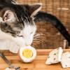 Inilah 3 Manfaat Kuning Telur untuk Kucing dan Kandungan Nutrisinya