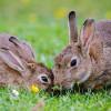 Memenuhi Kebutuhan Vitamin Kelinci dan Memilih Makanannya