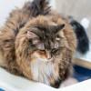 Cara Membuat Oralit untuk Kucing yang Diare Beserta Penyebabnya