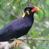 Kenali Keunikan dan Ciri Ciri Burung Beo Jantan