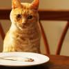 Berbagai Manfaat Minyak Ikan Untuk Kucing Kesayangan dan Efek Sampingnya