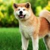 Beragam Ras Anjing yang Paling Setia pada Pemiliknya, Mana Kepunyaanmu?