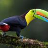 Belajar Memahami Beberapa Bentuk dan Fungsi Paruh Burung