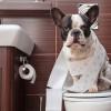 6 Cara Melatih Anjing Buang Air di Kamar Mandi Agar Lebih Disiplin
