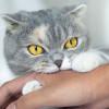 Waspada! Inilah Gejala Rabies Pada Kucing yang Harus Diketahui