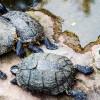 Bawa Keberuntungan, 8 Mitos Memelihara Kura-kura Ini Harus Diketahui