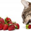 10 Vitamin Alami untuk Kucing Sakit, Pasti Bikin Sehat