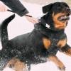 Awas! 7 Alasan Anjing Menyerang Manusia Ini Bisa Tiba-tiba Terjadi