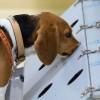 5 Jenis-jenis Anjing Pelacak dan Fungsi Mereka di Kepolisian