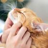 Ini Rahasia Dibalik Kenapa Kucing Mendengkur Beserta Penyebabnya