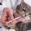 Panduan Cara Memberikan Obat Cacing Pada Kucing yang Cepat dan Aman