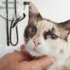 Cara Membersihkan Hidung Kucing yang Berkerak Dengan Mudah