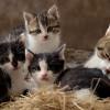 5 Cara Membantu Kucing Melahirkan Agar Prosesnya Lancar