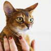 Jangan Sembarangan, Berikut 6 Cara Menggendong Kucing yang Benar