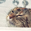 Jenis Shampo Manusia yang Cocok Untuk Kucing & Cara Menggunakannya