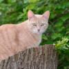Jangan Kaget, Ini 5 Kepribadian Kucing yang Jarang Diketahui Pemiliknya