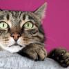 Ampuh! Ini 6 Cara Mengobati Kaki Kucing Bengkak Secara Alami