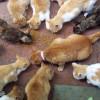 Yuk Merapat! Ini 5 Daftar Komunitas Pecinta Kucing Yang Ada di Indonesia