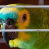 Berakibat Fatal! Ini Ciri-Ciri Burung Stres, Penyebab, dan Cara Mengatasinya