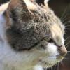 Ternyata Begini Cara Cari Tau Ciri Ciri Kucing yang Sudah Memasuki Usia Tua Paling Akurat