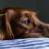Ternyata Begini Penyebab Anjing Susah Makan dan Memilih Makanan yang Dia Makan!