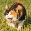 Kenapa Kucing Muntah Kuning? Yuk Kenali Penyebab dan Cara Mengobatinya