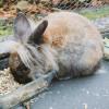 Daftar Makanan Kelinci Anggora yang Sehat dan Bernutrisi Tinggi, Bikin Makin Gemuk!