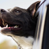 Jangan Dibentak! Rahasia Menjinakkan Anjing Galak Jadi Penurut yang Wajib Diketahui