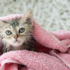 Jangan Keliru! Begini Cara Memandikan Anak Kucing Secara Mudah dan Aman