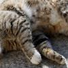 Kucing Cacingan Bikin Sengsara? Yuk Kenali Penyebab, Ciri-Ciri, dan Cara Mengobatinya