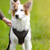 6 Alasan Kenapa Anjing Lebih Baik Dipelihara Dibandingkan Kucing, Apa Benar?