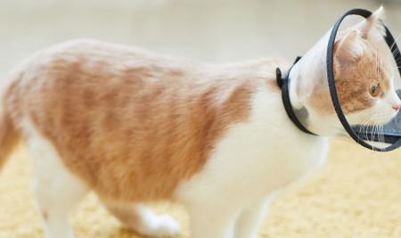 Ada Kutu di Kucingmu? Yuk Kenali Penyebab & Cara Membasminya