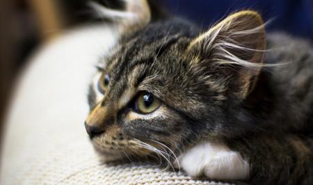 Sebelum Berpisah, Kenali 10 Ciri-Ciri Kucing Mau Mati yang Wajib Kamu Ketahui