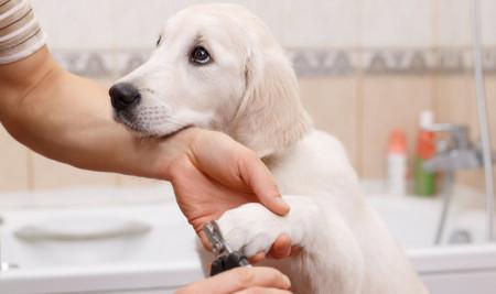 Begini Cara Menggunting Kuku Anjing, Dilakukan Sendiri di Rumah Secara Aman!