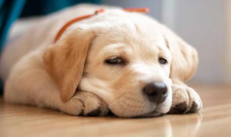 Bayi Anjing Mencret? Kenali Penyebab dan Cara Mudah Mengobatinya di Rumah