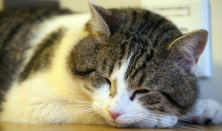 Hati-Hati! Ini 7 Jenis Penyakit Kucing Kampung yang Paling Umum Menyerang