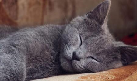 Kenapa Kucing Tidur Terus-menerus? Yuk, Kenali Beberapa Penyebabnya Ini!