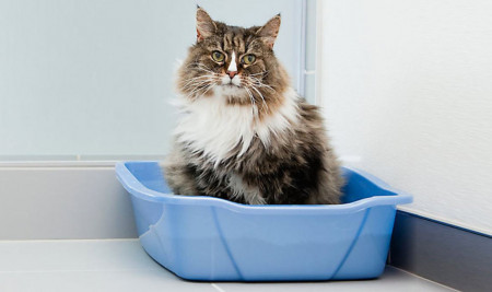 Ternyata Ini 6 Alasan Kenapa Kucing Buang Air Tidak Pada Bak Pasirnya