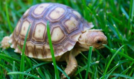 Ini 7 Jenis Kura-kura Darat yang Bisa Kamu Jadikan Peliharaan di Rumah