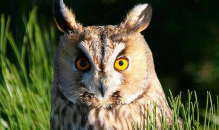 Ini Alasan Kenapa Burung Hantu Bisa Menjadi Peliharaan Terbaik, Masa Sih?