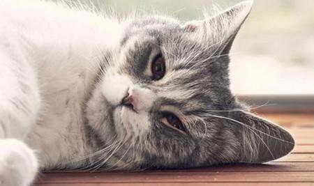 7 Penyebab Mata Kucing Belekan dan Cara Mudah Mengobatinya di Rumah