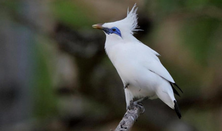 Yuk! Kenali Jenis-Jenis Burung di Indonesia yang Khas, Eksotis, dan Dilindungi
