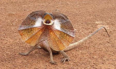 Masih Ada! 5 Hewan Purba ini Kelihatannya Keturunan Dinosaurus