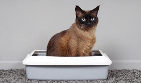 Rekomendasi Merek Pasir Kucing Terbaik dan Harganya, Wangi Tidak Bikin Kotor!
