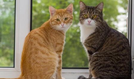 Bukan Mustahil, 5 Cara Merawat Kucing Kampung Agar Bulunya Lebat