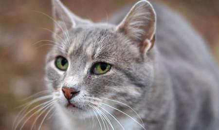 Ini Dia Jenis Makanan Kucing Hamil yang Paling Baik dan Sehat