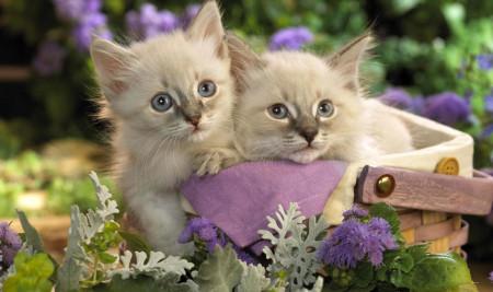 Kumpulan Nama Kucing Lucu Jantan dan Betina, Mudah Diingat Beserta Artinya