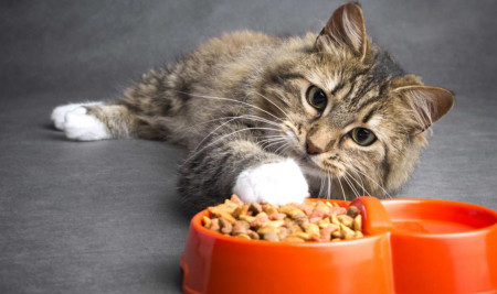 Kucingmu Kehilangan Nafsu Makan? Ini Cara Agar Kucing Mau Makan Lagi!