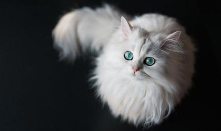 Ayo Dipilih, Ini Daftar 30 Nama Kucing Islami Beserta Artinya!