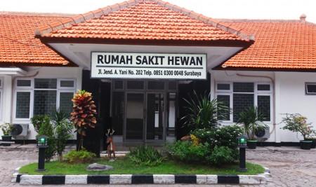 Daftar Klinik & Dokter Hewan Surabaya Terbaik yang Bisa Kamu Kunjungi